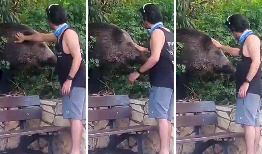 """סאם הנסליין מלטף את החזיר. """"זה לא שווה את זה"""" (צילומים: לואן כהן)"""