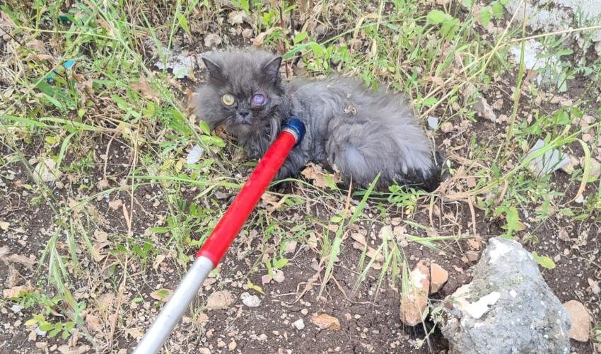 החתול שחולץ מהבור (צילום: דוברות עיריית חיפה)