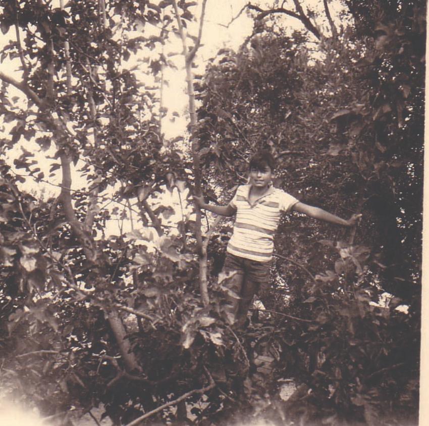 """""""טרזן על העצים"""". אברם קנטור בילדותו בקרית אליעזר (צילום: באדיבות אברם קנטור)"""