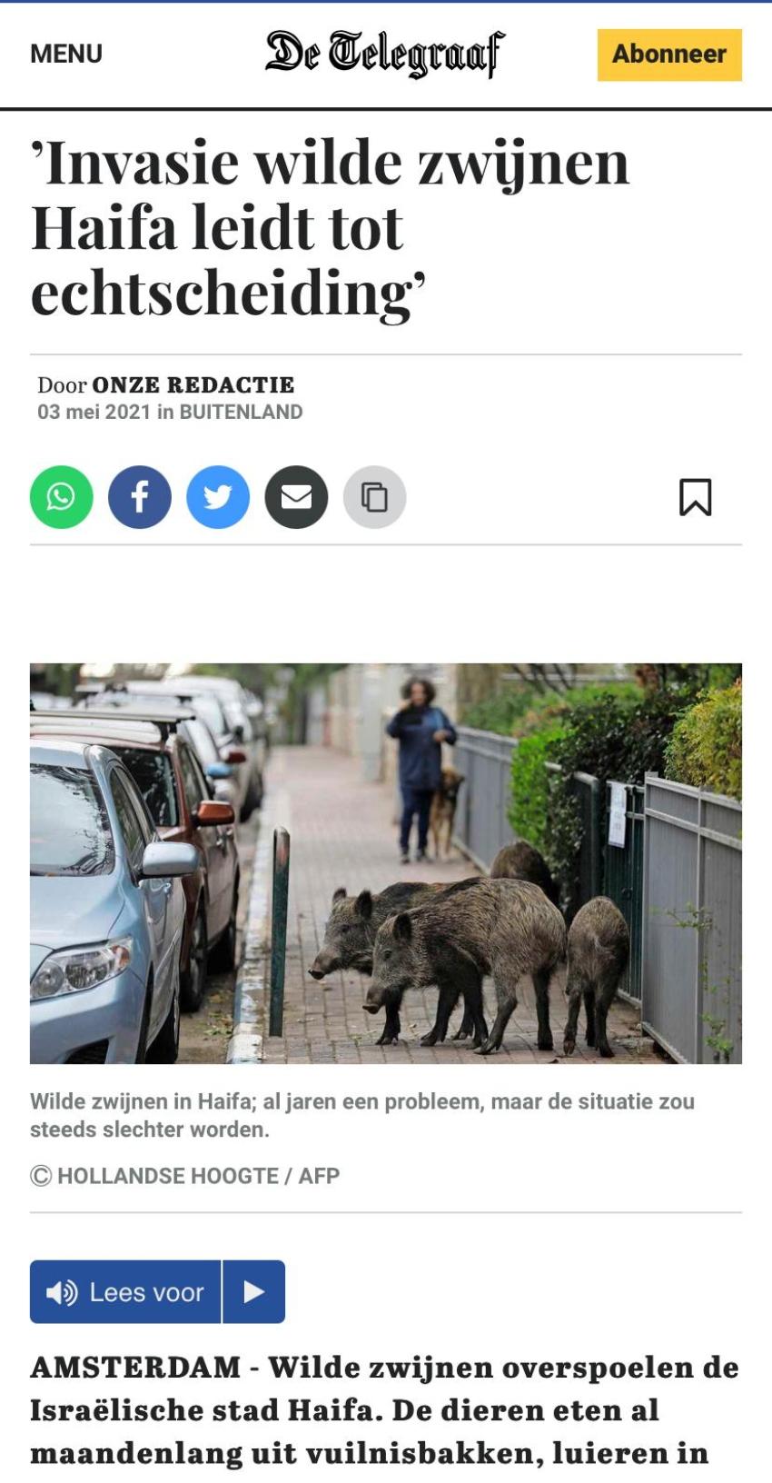 """""""פלישת חזירי הבר בחיפה מובילה לגירושים"""". כותרת ב""""דה טלגרף"""" ההולנדי"""