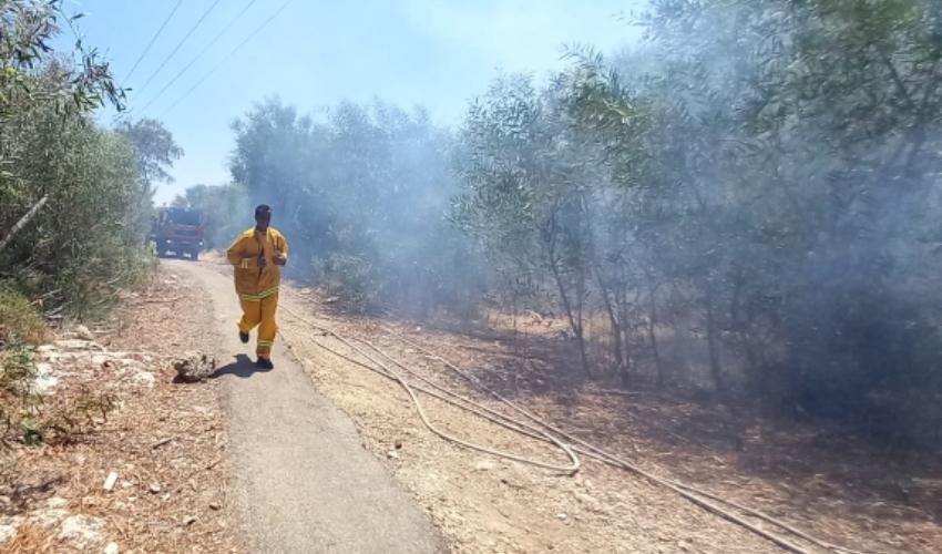 שריפת חורש בקרית אתא (צילום: דוברות כבאות והצלה מחוז חוף)