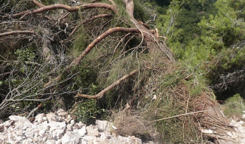"""""""כריתה מאסיבית של עצים ופגיעה בלתי הפיכה בחורש טבעי ותיק"""" (צילום: בני איתן)"""