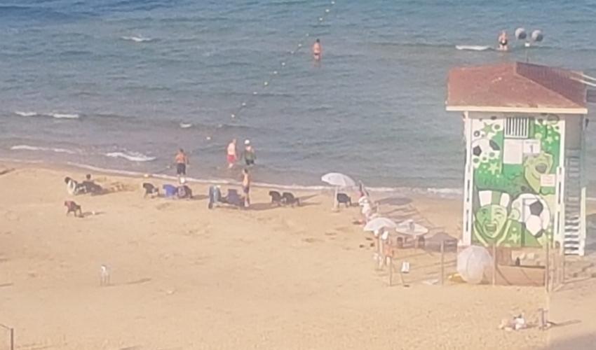 חוף הפופ-אפ כפי שהוא נראה היום (צילום: ברכה בריל)