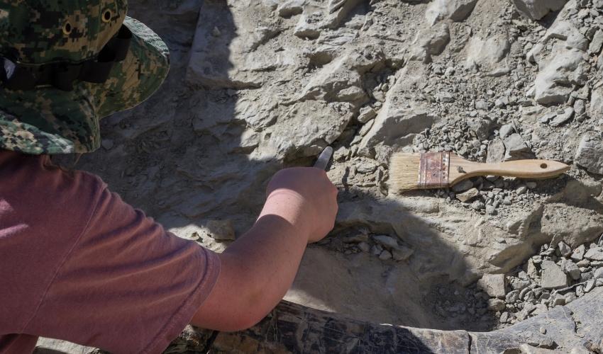 חפירה ארכאולוגית (צילום: wollertz/depositphotos.com)